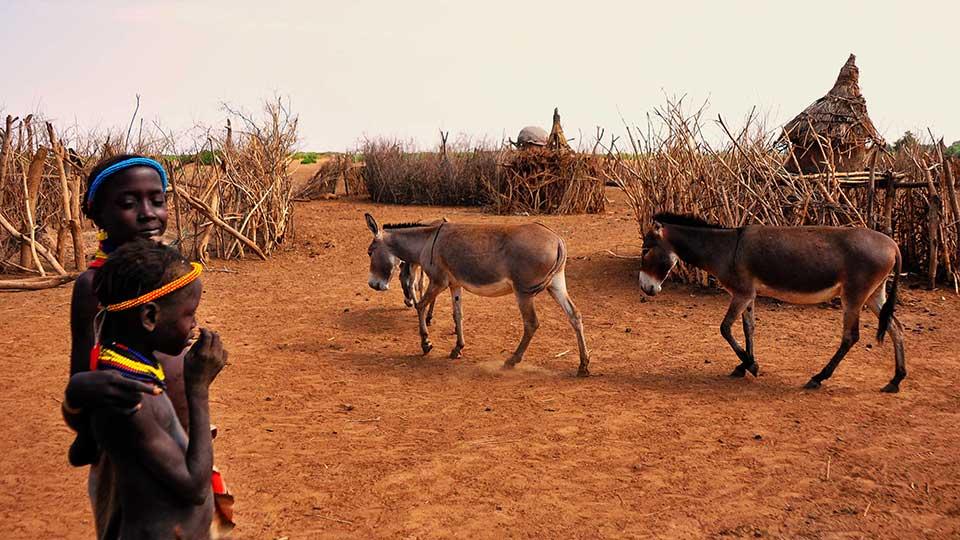 Flickr's Rod Waddington's photo of Ethiopian children and donkeys